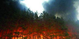 В Херсонській області не можуть загасити лісову пожежу - today.ua