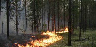 Українців попередили про надзвичайну пожежну небезпеку - today.ua