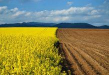 У Зеленского хотят до конца года отменить мораторий на продажу земли - today.ua