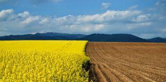 У Зеленського хочуть до кінця року скасувати мораторій на продаж землі - today.ua