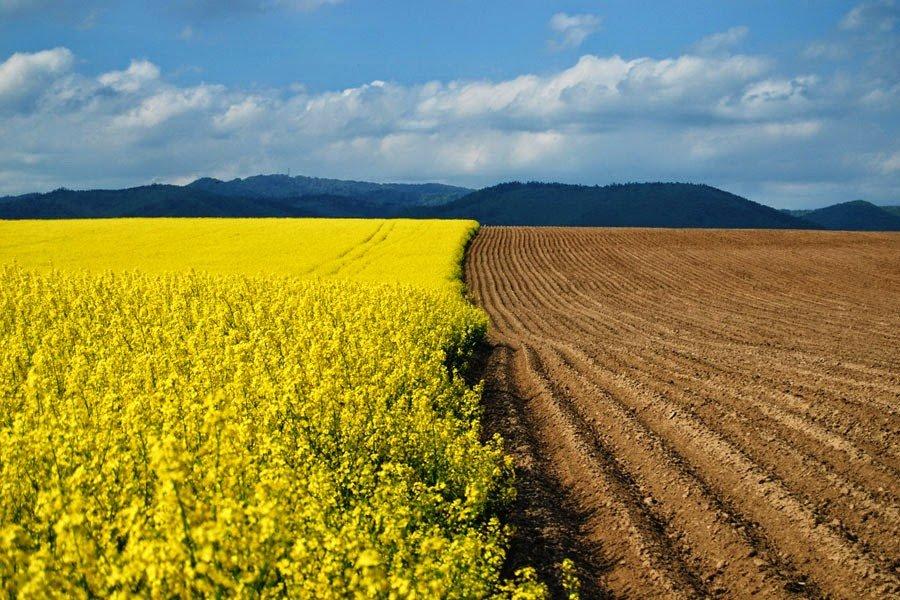 В Україні зростає вартість оренди землі: українцям розповіли, що буде з цінами далі