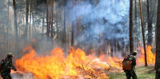 В Украине преобладает высокий уровень пожарной опасности - today.ua