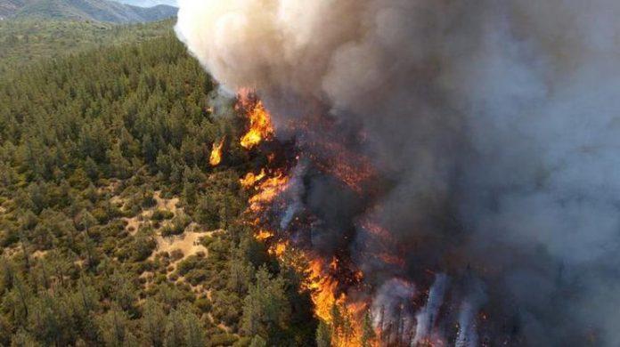 Ліс біля Берліну міг бути навмисно підпалений - today.ua