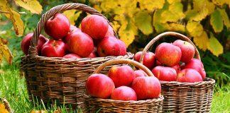 Вартість яблук двічі дешевша, ніж торік - today.ua