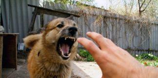 """В Тернопільській області собака відкусила палець хазяїну """" - today.ua"""