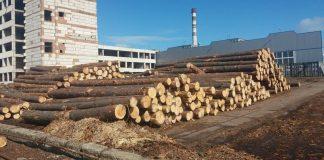 Масштабну аферу із деревиною для  ЄС викрили в Україні - today.ua