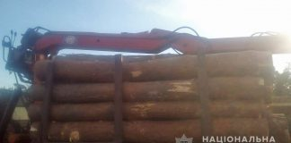 В Житомирській області чоловіки нарубали дров на близько 70 тисяч гривень - today.ua