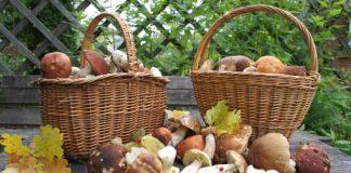 Что нужно делать, если есть подозрение на отравление грибами - today.ua