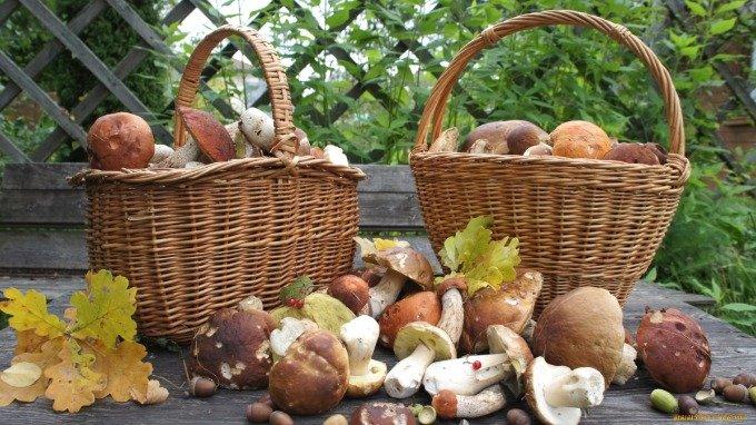 Що потрібно робити, якщо є підозра на отруєння грибами - today.ua