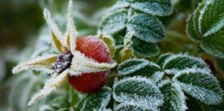 Киян попередили про заморозки і дощі - today.ua
