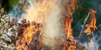 За сжигание листьев украинцев будут штрафовать - today.ua