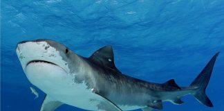 В штате Массачусетс впервые за последние 82 года от нападения акулы погиб человек - today.ua