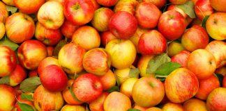 Найбільше фруктів цього року Україна продала Білорусі - today.ua