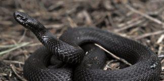 В Тернопільській області 8-річну дівчинку вкусила отруйна змія - today.ua