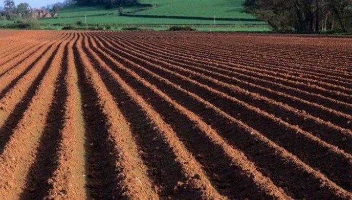 Ринок землі: в уряді розповіли, в якому випадку держава може конфіскувати придбані ділянки