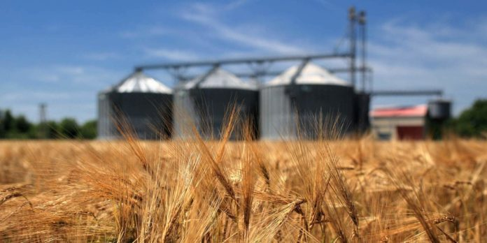 Украина отправила на экспорт почти 7 млн тонн зерновых - today.ua