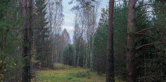 В Харьковской области на грибника упало дерево: мужчина погиб - today.ua