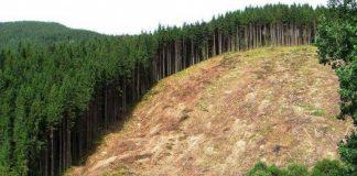 Депутат судится с Кабмином за сохранение буйных лесов - today.ua