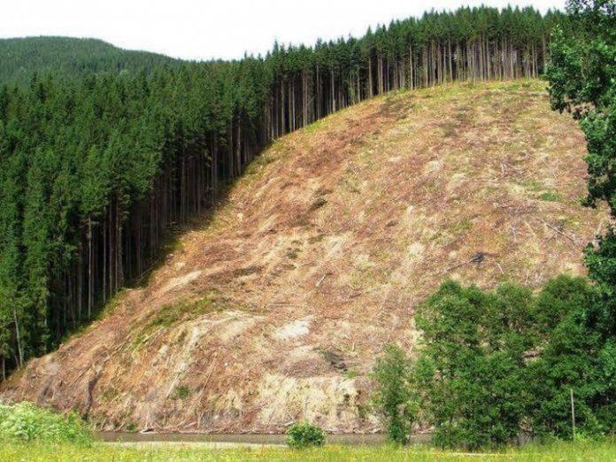 Депутат судиться з Кабміном за збереження буйних лісів - today.ua
