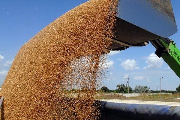 Понад 12 мільйонів тон українського зерна експортували за кордон - today.ua