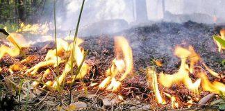 На Донбассе чрезвычайная пожарная опасность — Укргидрометцентр - today.ua