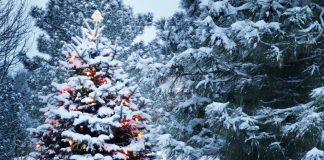 Стало відомо, якою буде новорічна ніч в Україні - today.ua
