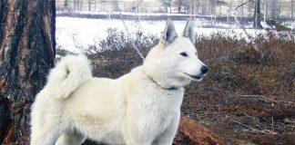 Собака покусав двох дітей на Сумщині - today.ua