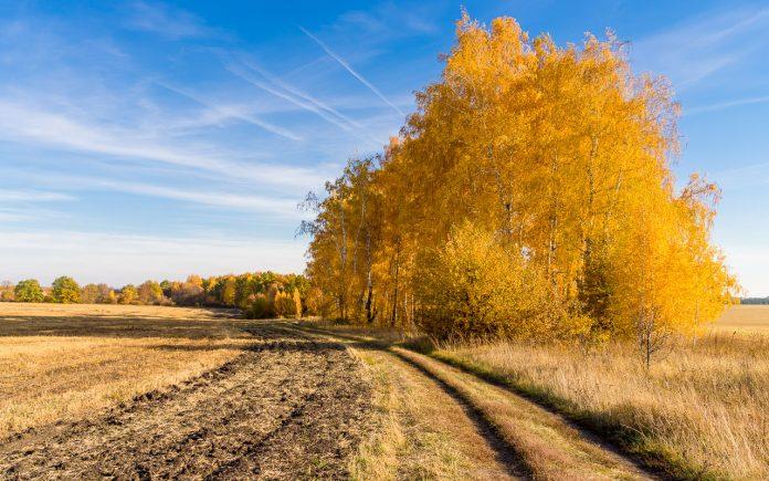 Бабине літо повертається: завтра в Україні значно потеплішає - today.ua