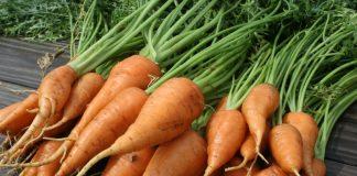 В Україні подешевшала морква - today.ua