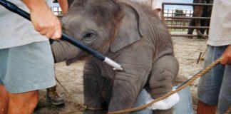 Цирк судится с КГГА за право использовать диких животных - today.ua