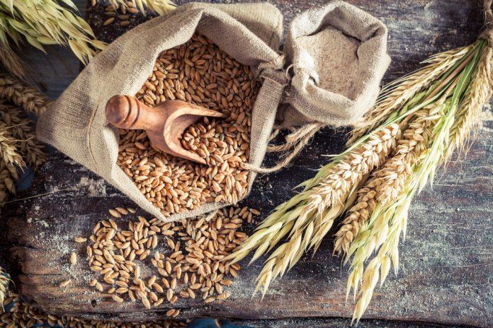 В Україні по-новому оцінюватимуть якість пшениці - today.ua