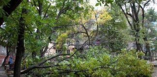 На Полтавщине коммунальщицу привалило деревом - today.ua