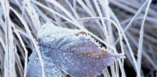 Сильні заморозки: прогноз синоптиків на 9-10 жовтня - today.ua