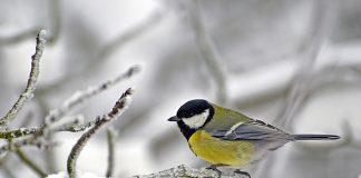 Тепло і багато снігу: синоптик озвучив прогноз погоди на зимові свята - today.ua