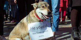 Рада відмовилась посилювати кримінальну відповідальність за жорстоке поводження з тваринами - today.ua
