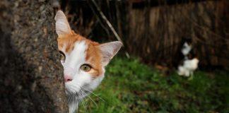 На Полтавщині чоловіка заарештували на 6 років за знущання над котом - today.ua