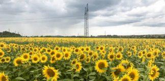На Хмельниччині побудують ТЕЦ на соняшниковому лушпинні - today.ua