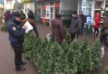 Українцям загрожує істотний штраф за незаконну вирубку ялинок - today.ua