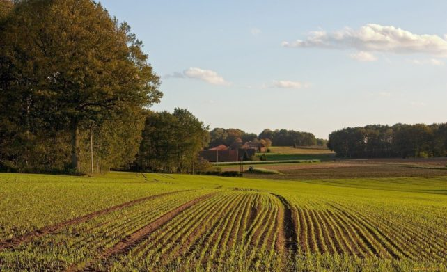 Рынок земли: многие землевладельцы в ближайшее время могут потерять свои паи - today.ua