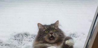 До України йде похолодання: синоптик розповіла, коли очікувати морозів - today.ua