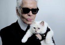 Наследницей Карла Лагерфельда может стать его кошка Шупетт - today.ua