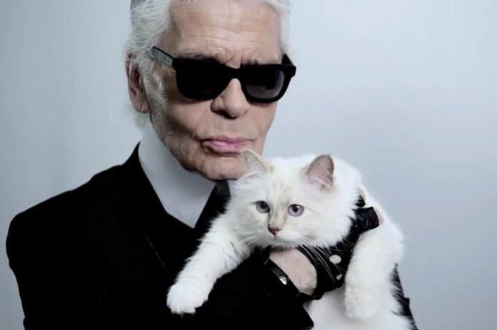 Спадкоємицею Карла Лагерфельда може стати його кішка Шупетт - today.ua