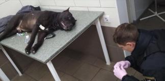 В Киеве полицейский застрелил собаку: появились подробности - today.ua