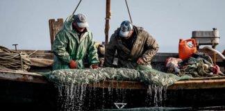 Україна підписала договір з Росією про вилов риби в Азовському морі - today.ua