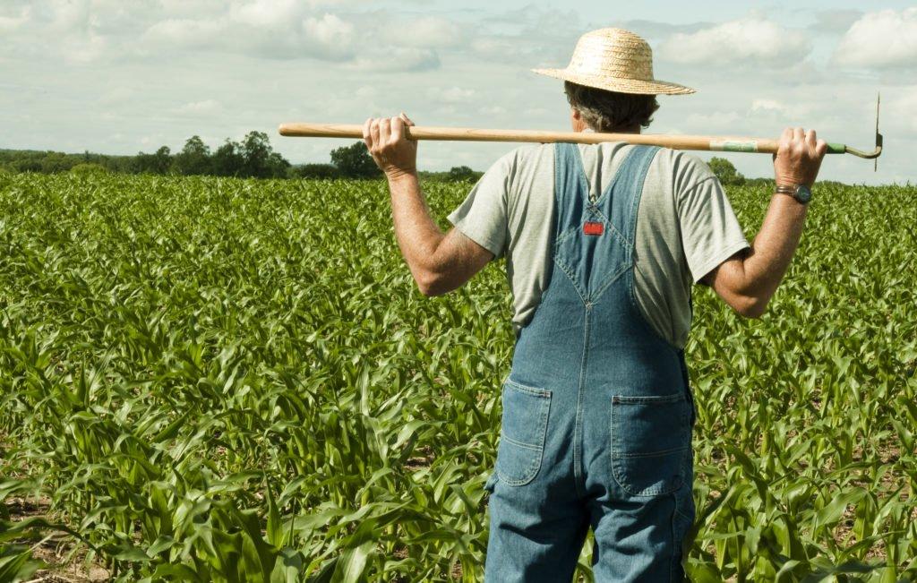 Рынок земли: как уберечься от аферистов и кому жаловаться, если земля оказалась в чужих руках