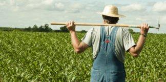 Два гектари на кожного українця: як отримати землю безкоштовно і за скільки її потім можна буде перепродати - today.ua