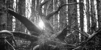 В Винницкой области еще один человек умер от падения дерева - today.ua