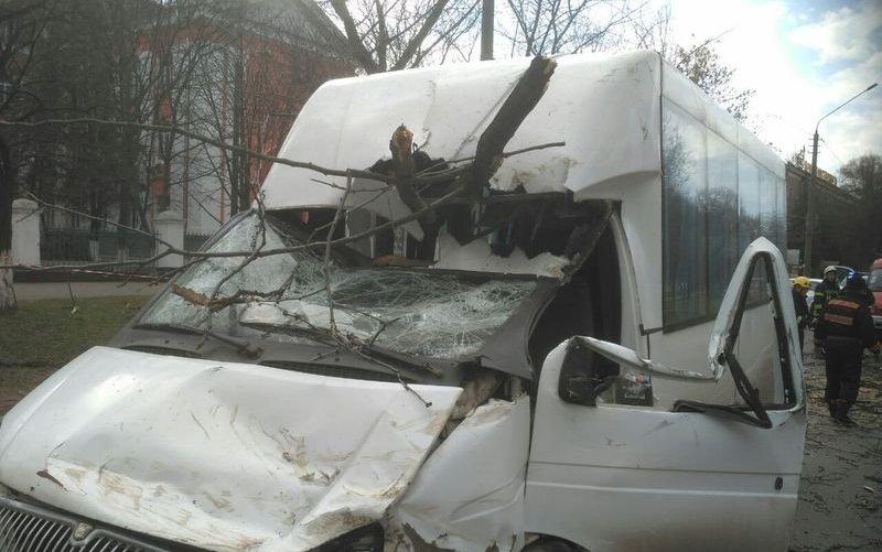 У Миколаїві на маршрутку впало дерево: постраждали діти - today.ua