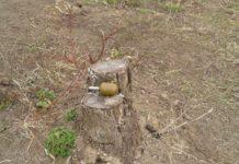 В Одесской области погиб мужчина, который играл с гранатой - today.ua