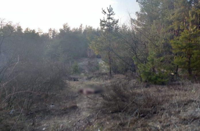 На Харківщині біля цвинтаря знайшли тіло вбитого солдата-контрактника - today.ua